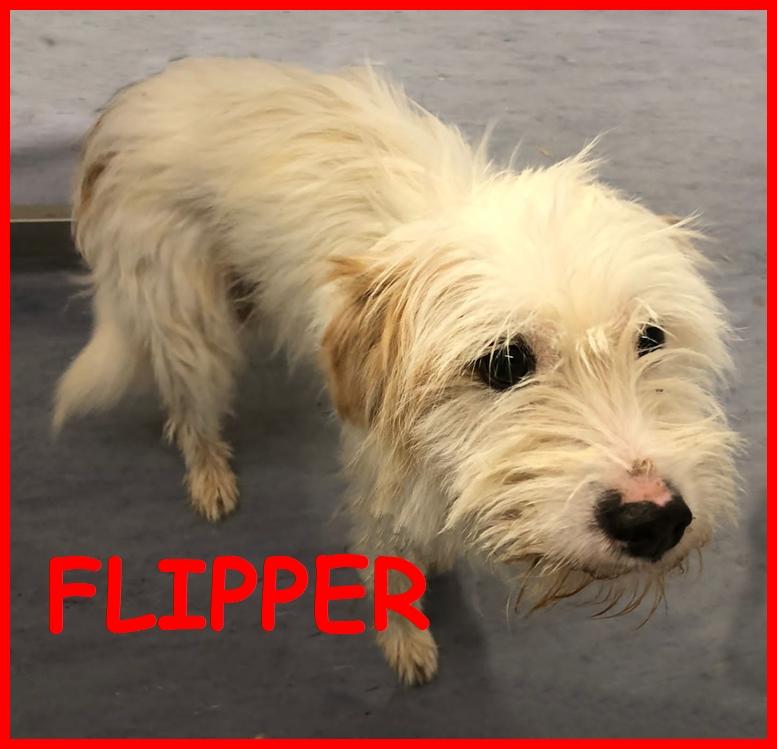 FLIPPER simil yorkino 5 kg chiuso in gabbia in canile