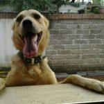Foto del profilo di Susanna's Dogs