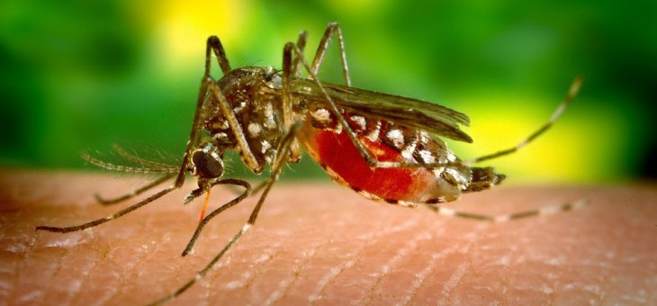 The Zika Virus Isn't New This Year