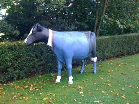 Model Cow in Craigclowan Prep School Uniform