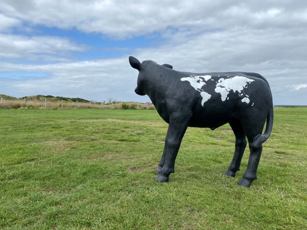 Calf Model at St.Andrews with World Map