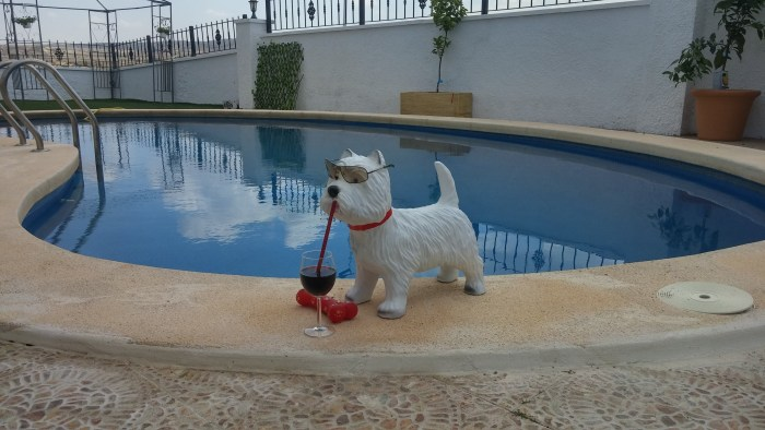 West Highland Terrier in Spain