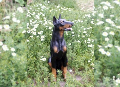 Life Size Model Doberman Dog