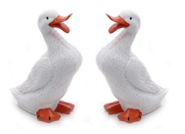 Model White Duck