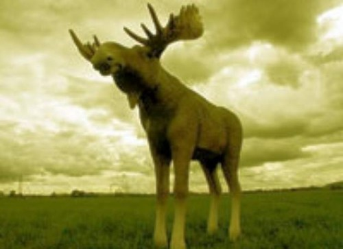 Life Size Elk / Model Moose