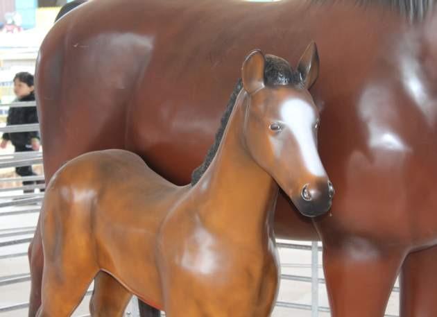 Life Size Model Foal