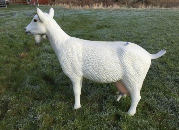 Life Size Model Milking Nanny Goat