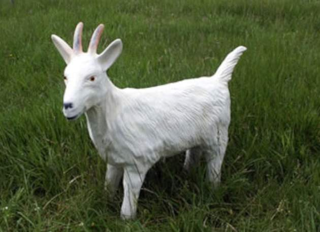 Life Size white female model goat