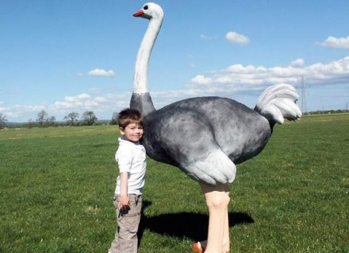 Life Size Ostrich Model
