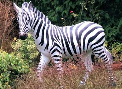 Life Size Model Zebra