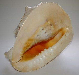 Conch-3