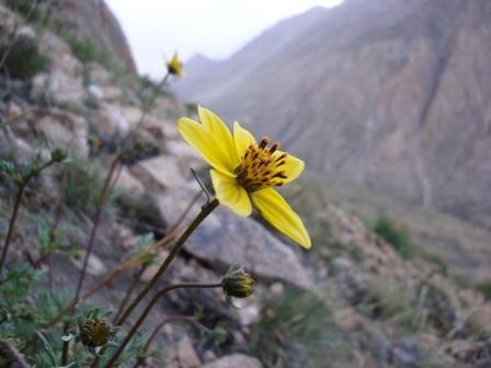 Resultado de imagem para imagens sobre flores e a montanha