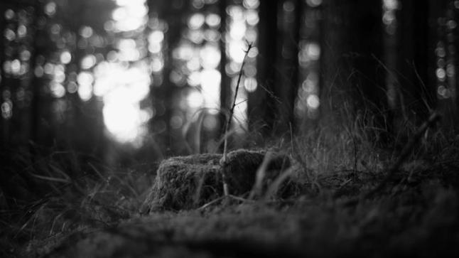 THE FOREST OF LOST SOULS