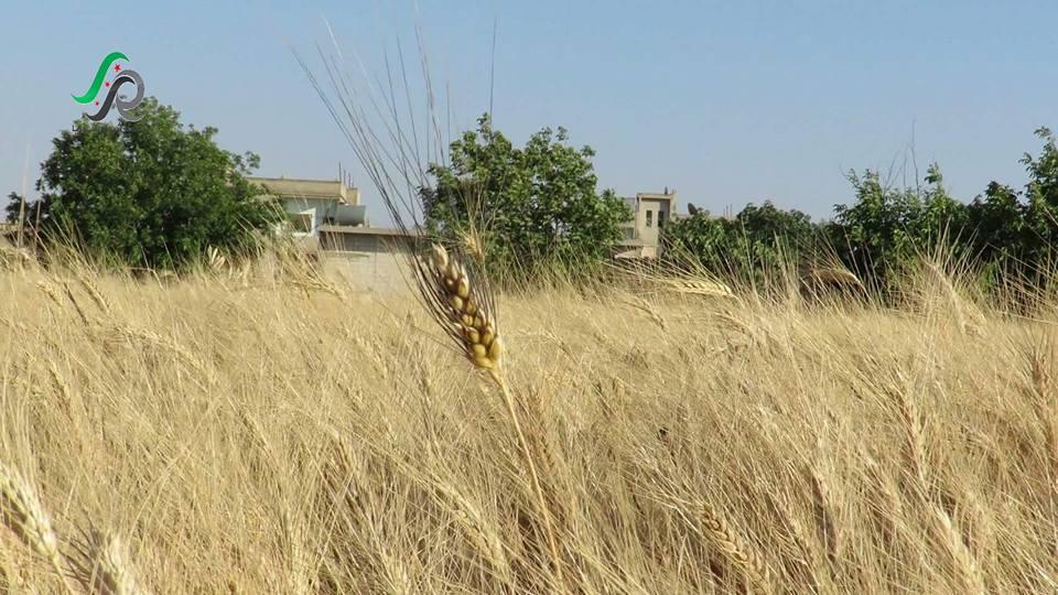 homs - talbesa - wheit