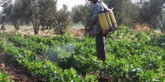 انخفاض مساحة الأراضي المزروعة في بلدة الغنطو يزيد معاناة الأهالي