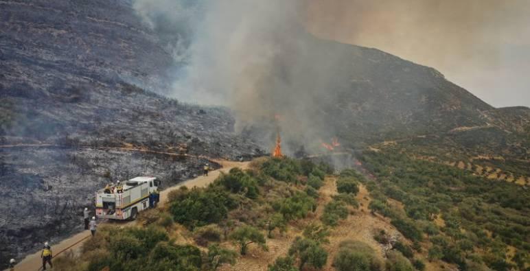 نظام الأسد يعدم منفذي الحرائق في غابات الساحل السوري ولم يكشف هوياتهم