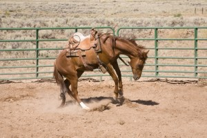 Prepare Your Horse After Any Layoff To Avoid Horse Behavior Issues