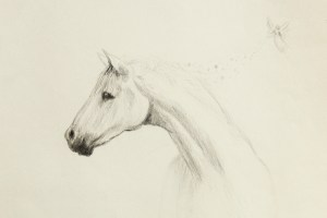 More on How To Get The Best Horse - About Horse Training