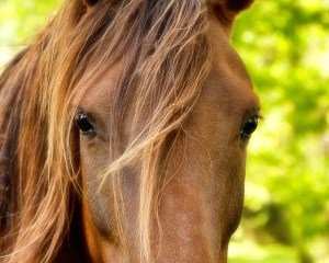 Horse Arguments Don't Work