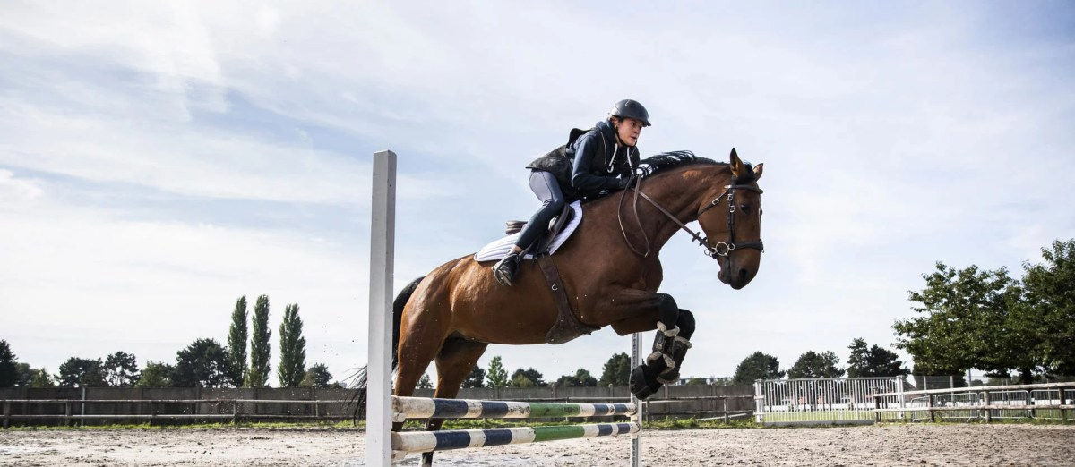 histoire horse spirit