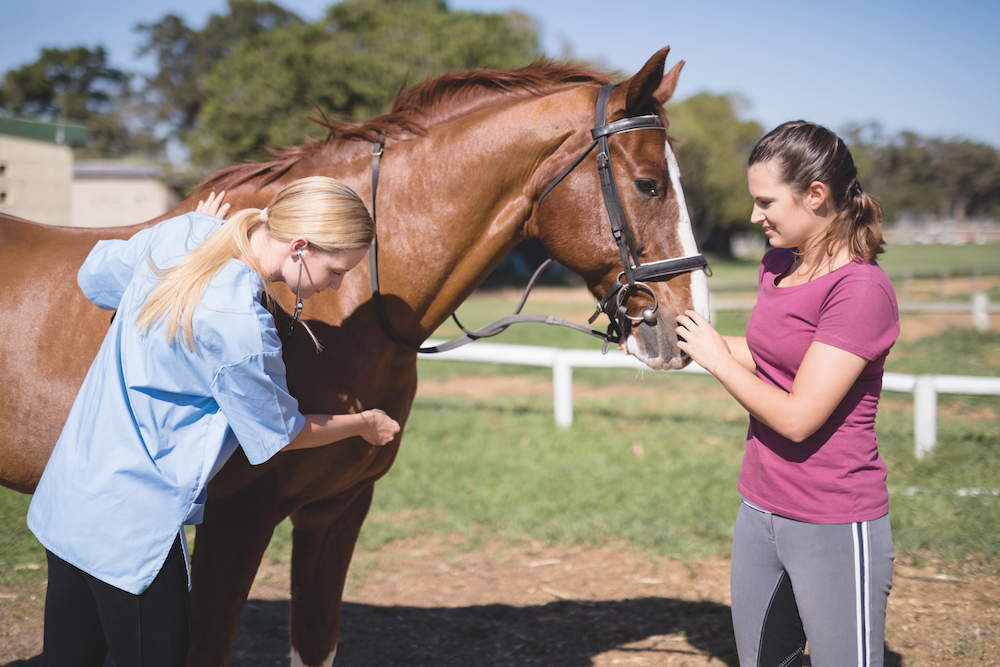 What to consider when vetting a horse for purchase