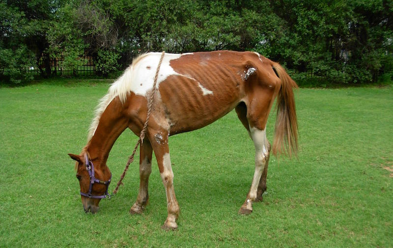 Reporting cases of suspected equine abuse and neglect