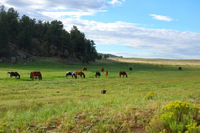 Hawking_Horses_as_they_Graze