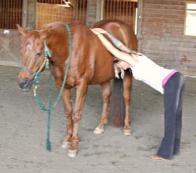 Horse-Downward-Dog
