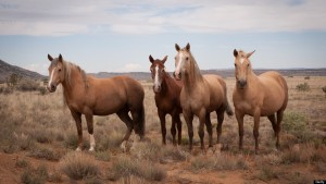 Horses near Cabezon Peak