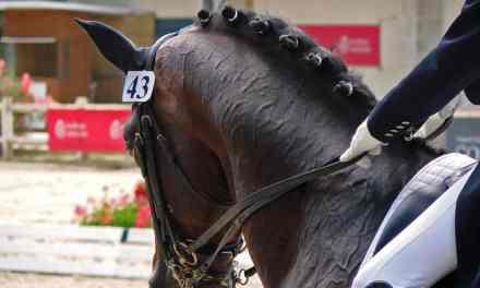Advokat Pernille Skinnerup. Juridisk bistand ved hestehandel, skader, forsikring