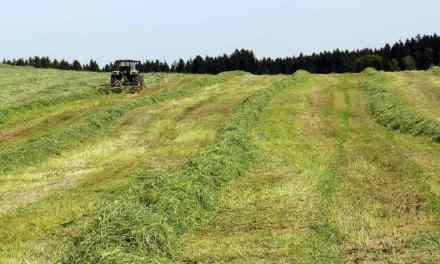 Græsset. Skal det blive til hø eller wraphø?