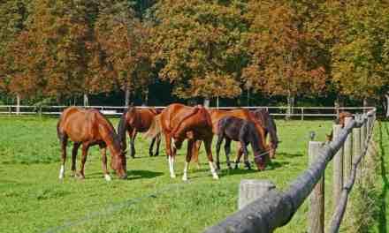 Få optimeret dit hestehold via Hotline