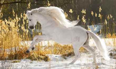 Altid nye og inspirerende hestebøger, film, kalendere og plakater