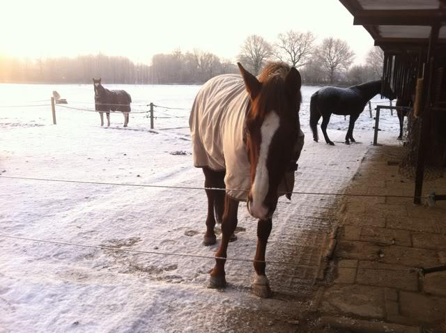 Winter im Offenstall, ohne fließend Wasser, ohne Strom, für die Pferde kein Problem, für den Reiter schon ungemütlich