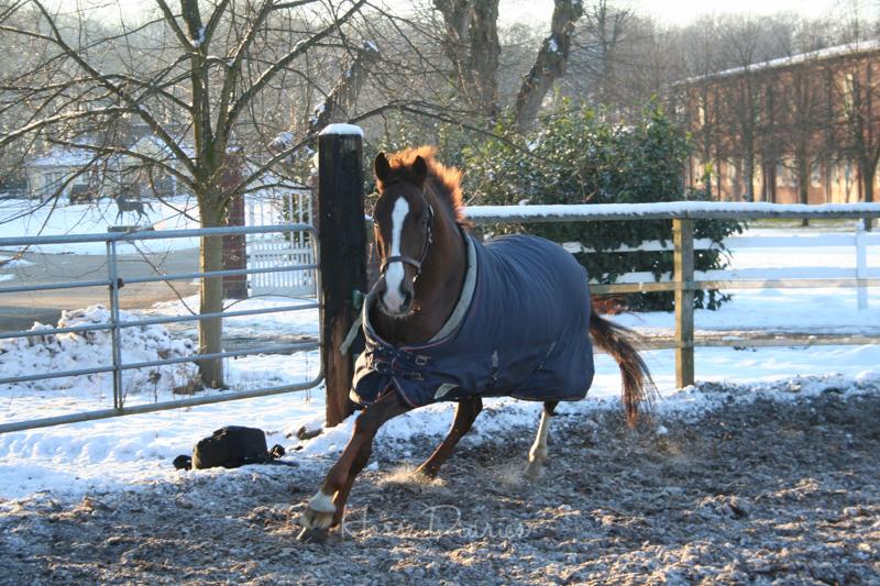 Winter im Round Pen zum austoben