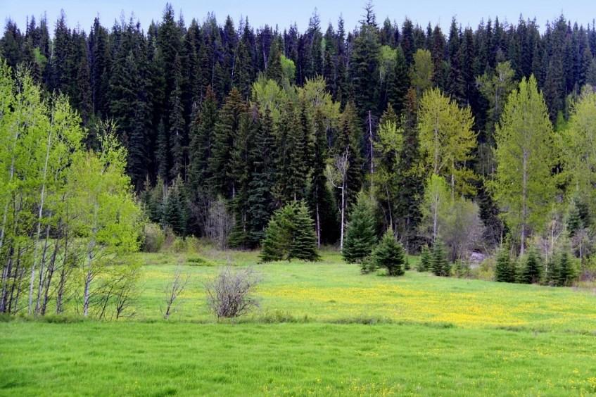Walters Ranch Moffat Creek Acreage 765 Acres - Horsefly, BC