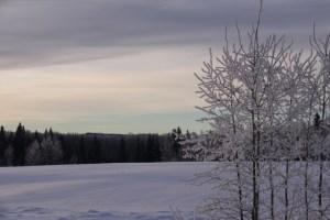 snowy hayfield