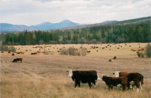 Ranches & Farms (for sale) in Horsefly, B.C.