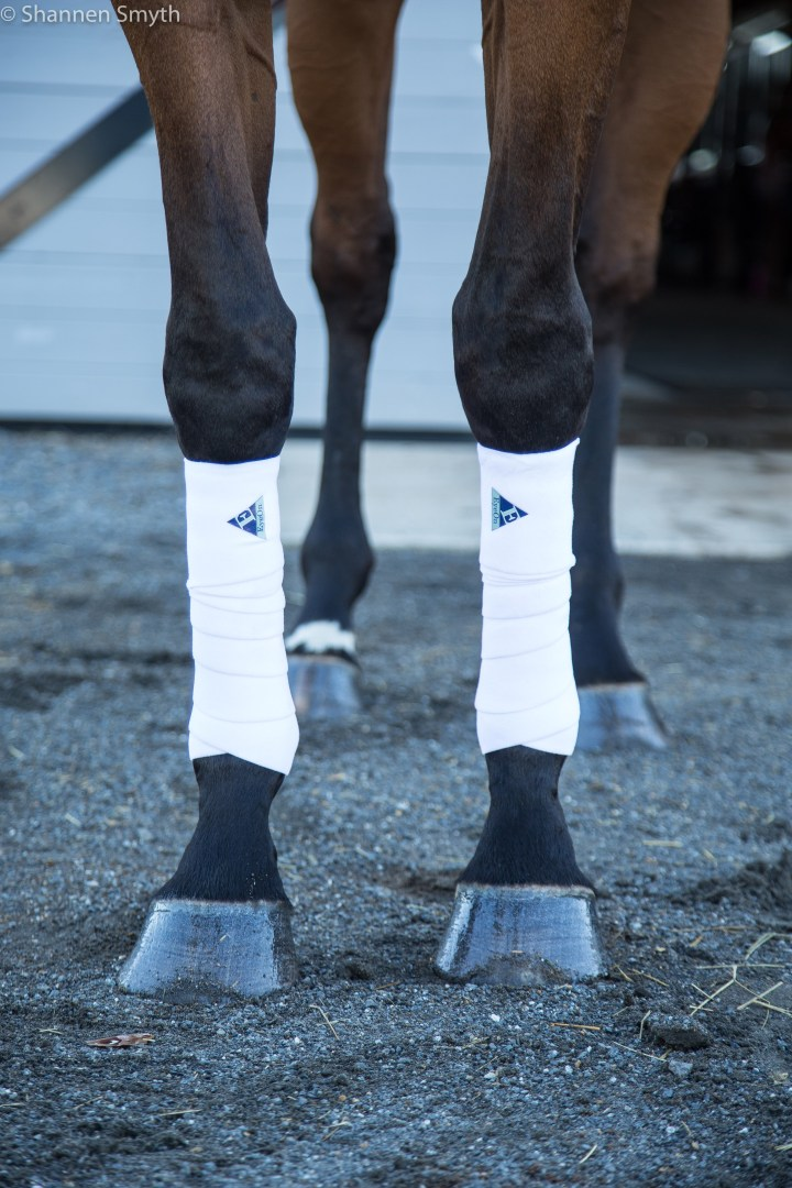 Feel the Warmth: Eyeon Equine Wraps, by Chloe
