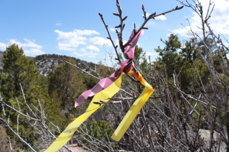 The pink flag line that Trails 2000 put in for a freeride trail merges with a yellow flag line that some other people put in for another proposed freeride trail.