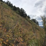 Improved game trail targeted for closure with newly approved Sky Raider Trail