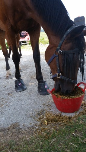 Great for barefoot horses that are sensitive with stony paths and they act as extra shock-absorbers.