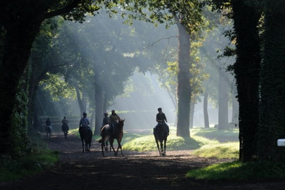 Visit the training center and discover the secret world of     Nestled in the park of Maisons Laffitte  the unique training center for  racing horses in the Paris area  Ile de France  invites you    back stage