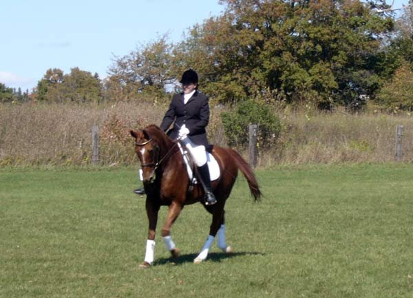 Annahi performing a dressage demonstration