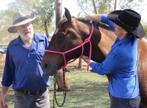 Kath and Steve Rochford - Horse Muscle Care Therapy