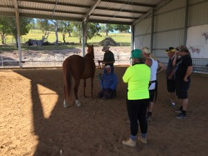 Learning about the hoof