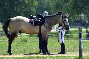 Assessing saddle fit during a treatment
