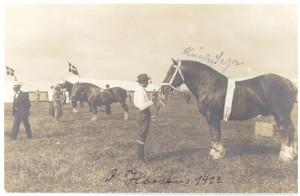 På billedet ses hingsten Sejr ved jubilæumsskuet i 1922.
