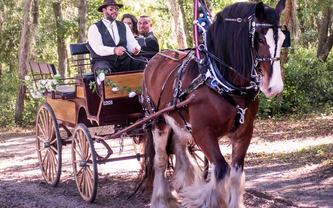Central Florida Clydesdale Carriage Rentals