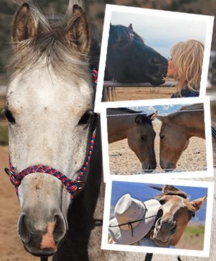 Dust Devil Ranch Sanctuary for Horses